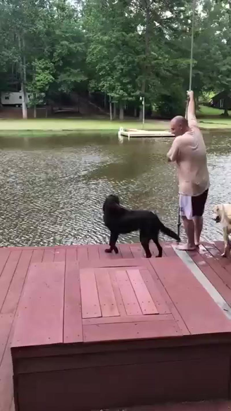 Собаки поплыли спасать своего хозяина, который не тонул