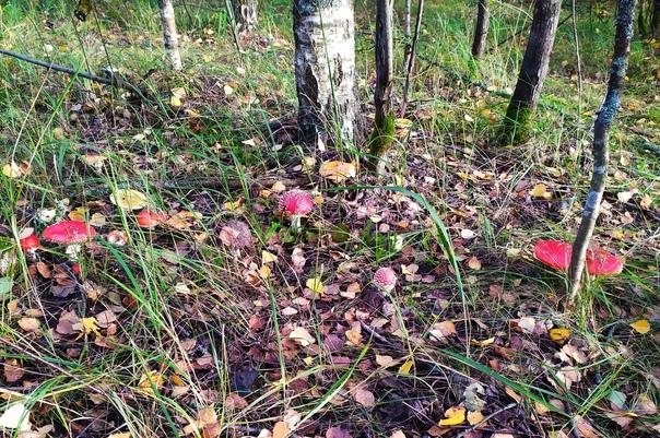 Хорошего дня! Осенний лес 🍄. Балахна....